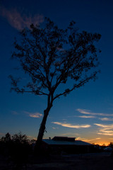 lonely tree under a christmas sunset